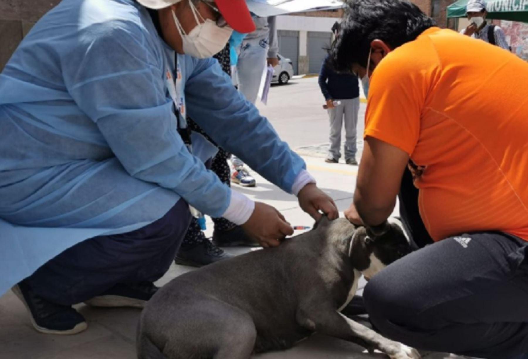 CONOCE AQUÍ LOS PUNTOS DE VACUNACIÓN DEL VANCAN. Este sábado inicia Vacunación Antirrábica Canina en Arequipa