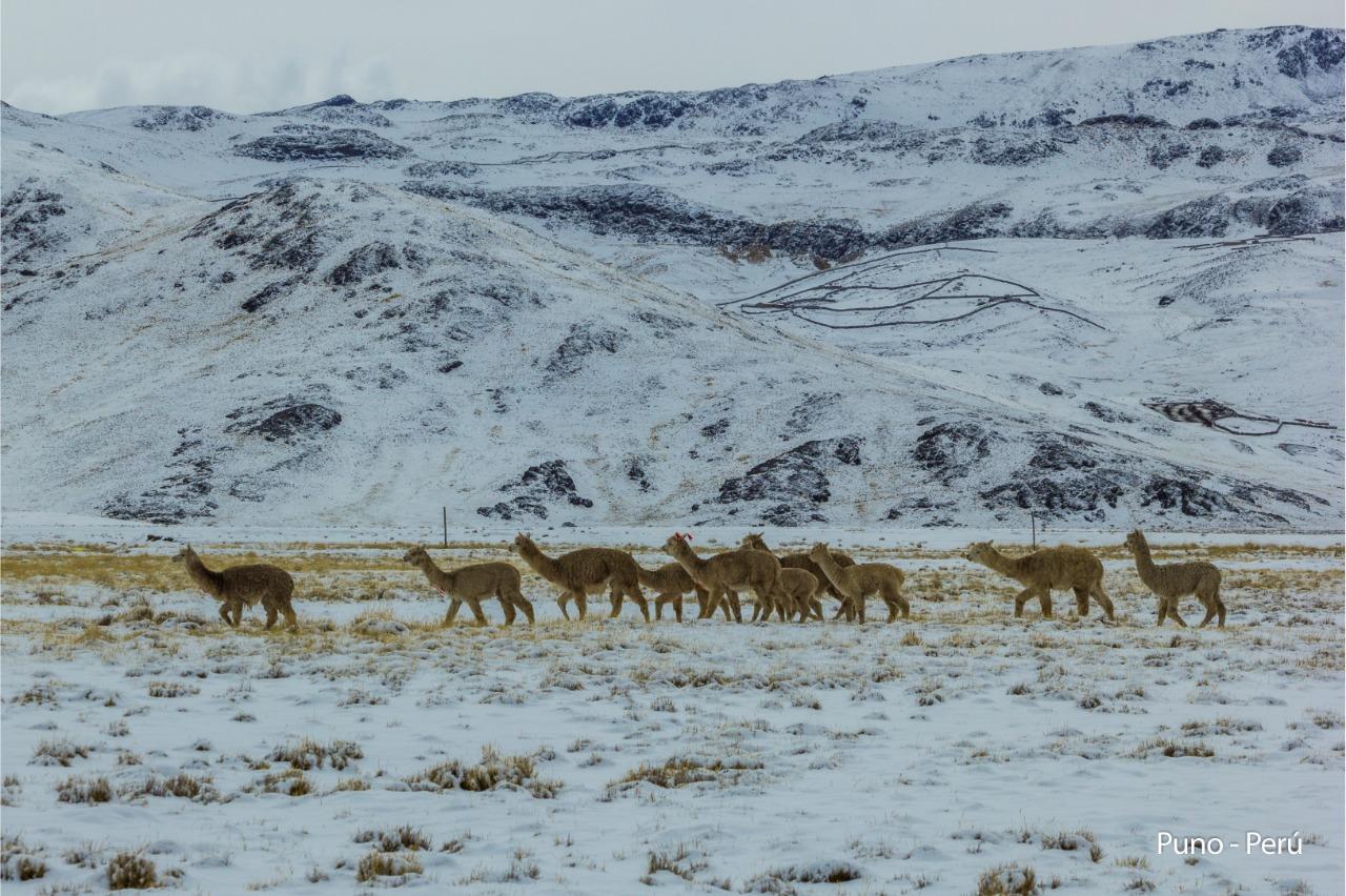 #VIDEO Este es el panorama en la carretera Arequipa – Puno tras nevada registrada el martes